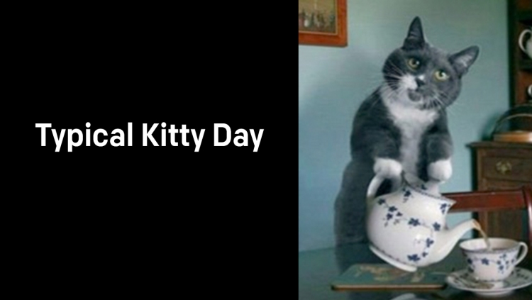 A1_005.00_Typical-Kitty-Day