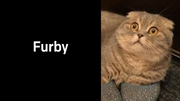 A1_012.00_Furby