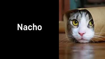 A1_013.00_Nacho