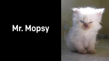 A1_014.00_Mr.-Mopsy