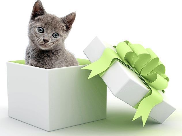 94800076-pet-promise-certificate-632x475