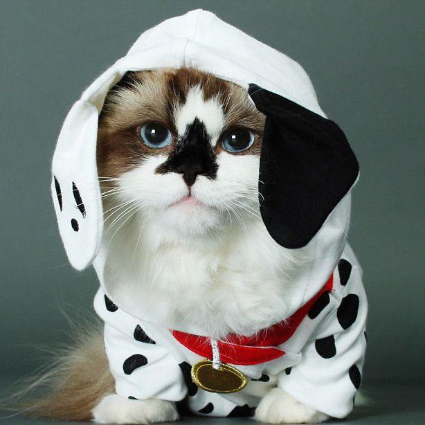 388586d084389a0c15f1a5726a81be11--dalmatian-costume-cute-halloween-costumes